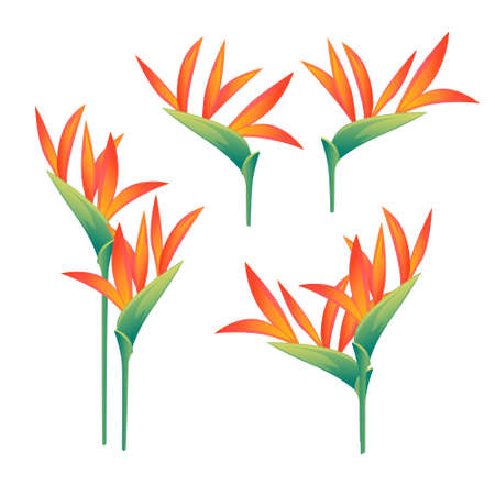Set of four decorative flowers Bird of Paradise floral element for garden or flower pot flat vector illustration isolated on white background.