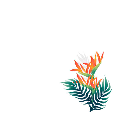 Pattern of decorative flowers Bird of Paradise floral element for garden or flower pot flat vector illustration isolated on white background. Çizim
