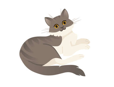 Cute cartoon animal design white and gray striped domestic cat adorable animal flat vector illustration.