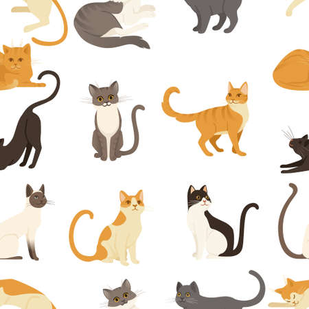 Seamless pattern of cute cartoon animal design white brown and orange domestic cat adorable animal vector illustration