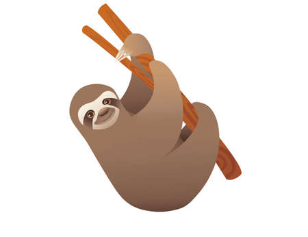 Sloth hanging on a branch cartoon animal design vector illustration on white background