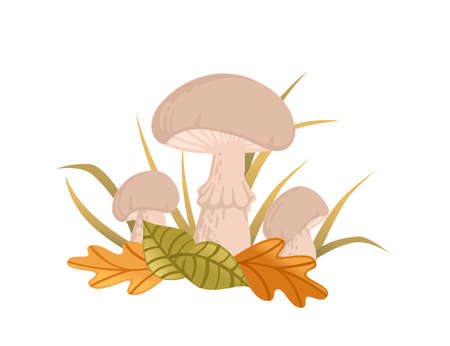 White edible mushrooms growth in forest with yellow and green leaves vector illustration