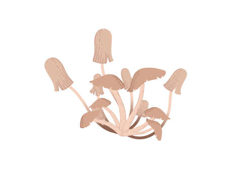 Edible honey mushrooms grow from ground vector illustration on white background