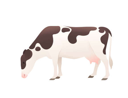 Dairy cattle ayrshire cow spotted domestic mammal animal cartoon design vector illustration on white background.