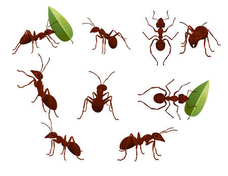 Set of cute brown ant holding a green leaf cartoon bug animal design vector illustration isolated on white background. Ilustracje wektorowe