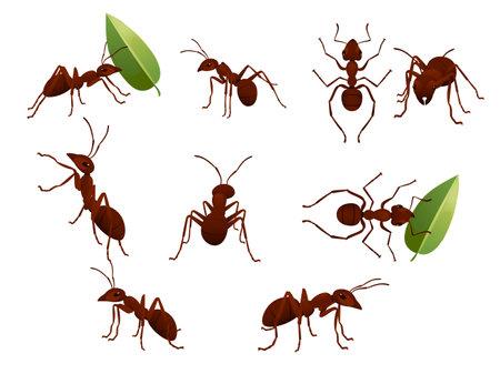 Set of cute brown ant holding a green leaf cartoon bug animal design vector illustration isolated on white background. Vector Illustration