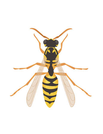 Wasp flying danger insect cartoon wasp design vector illustration on white background top view