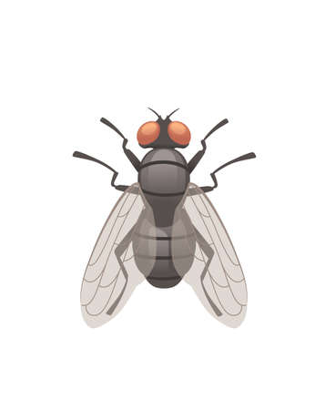 Housefly flying insect cartoon fly design vector illustration on white background top view Çizim