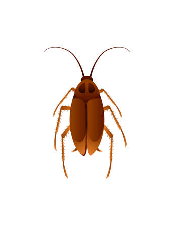 Top view illustration on cockroach cartoon domestic insect pest design vector illustration isolated on white background