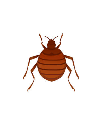Top view illustration on bed bug cartoon bloodsucking insect design vector illustration isolated on white background Stock Illustratie