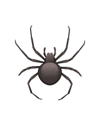 Top view illustration on spider cartoon insect black spider design vector illustration isolated on white background