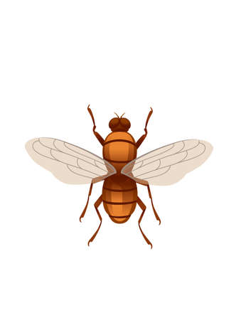 Midge flying insect cartoon fly design vector illustration on white background top view