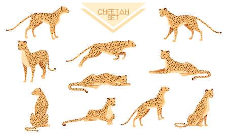 Set of Cheetah big wild cat african savannah predator animal cartoon design character vector illustration on white background Stock Illustratie