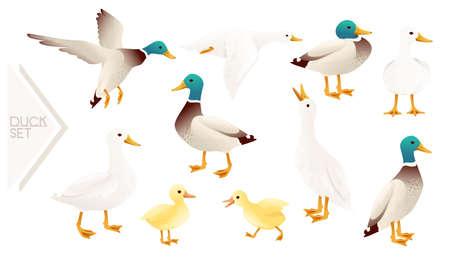Set of cute mallard duck cute flying goose cartoon animal design vector illustration on white background
