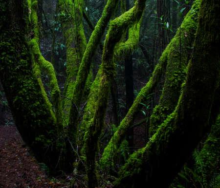 열대 우림에서 이끼가 덮인 나무