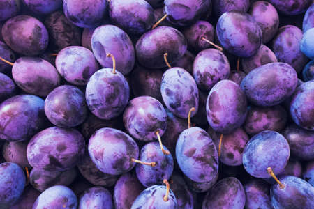 Fresh Plums. Blue and violet plums background texture. Stock Photo
