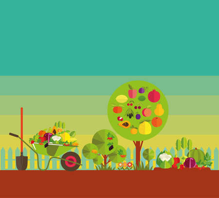 Gardening. Organic cultivation of fruit and vegetables. Fruit trees, garden bed with vegetables and berries, garden wheelbarrow with the harvest.