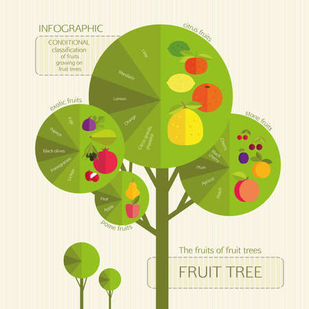 tillage: Gardening. Conditional classification of fruits growing on fruit trees. Infographic.