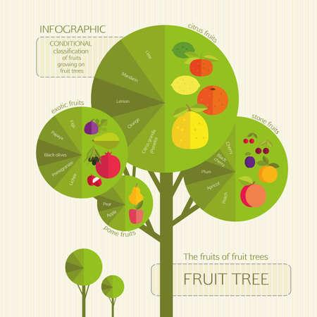 naranja arbol: Jardinería. Clasificación condicional de frutas que crecen en árboles frutales. Infografía. Vectores