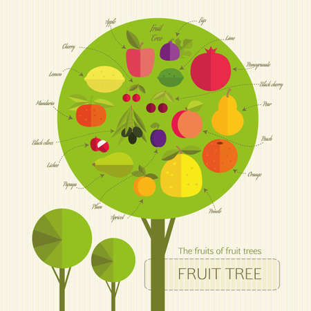 signed: Conditional fruit tree with fruits that grow on trees from different countries. Each fruit was signed. Gardening. Illustration