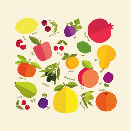tillage: Placer frutta colore luminoso che cresce su alberi da frutto. Firmato con il nome di ogni frutto.