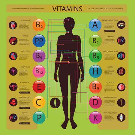 scheletro umano: Effetto di vitamine sugli organi e sistemi del corpo umano. Schema visivo. Vettoriali