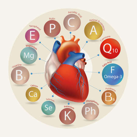 substances: Schematic representation of the heart and the basic substances required for normal cardiac activity. Basics of a healthy lifestyle.