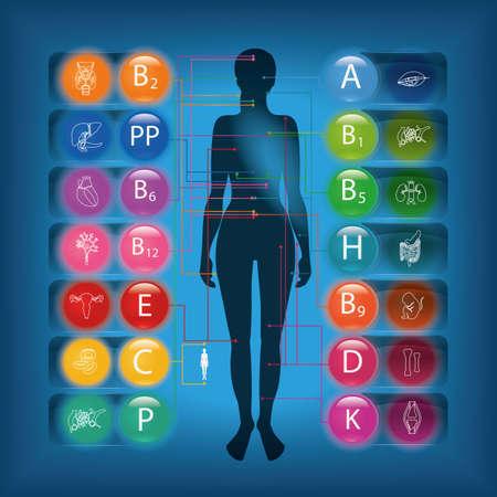 personas saludables: Efecto de vitaminas en los órganos y sistemas del cuerpo humano. Presentación ejemplar. Vectores