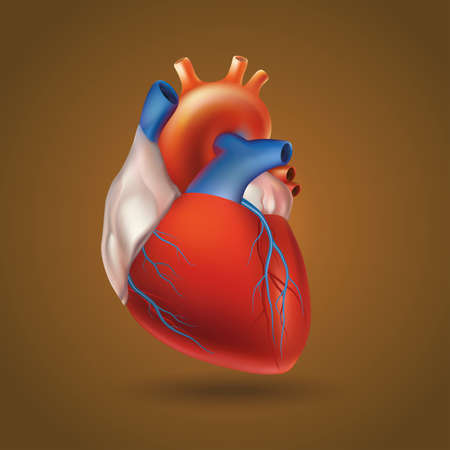 Voorwaardelijke beeld van een model van het menselijk hart (holle spier orgel dat het bloed pompt via de bloedsomloop door de ritmische contractie en dilatatie).