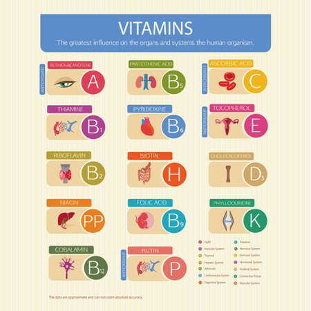 Vitamins and their effect on human organs. Schematic representation. The scientific name of vitamins and indication systems.