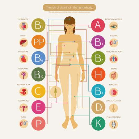 vitamina a: El papel de las vitaminas en la salud humana. Esquema visual con el nombre científico de las vitaminas y los sistemas de imagen del cuerpo humano.