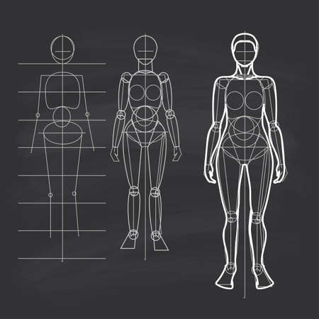 The circuit construction of the human figure. Female figure - narrow shoulders, wide hips. Line drawing. Chalk on the student board.