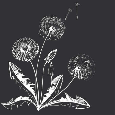 graphically: Hand drawing of a flower - dandelion. Dark background light pattern.