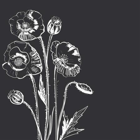 flower leaf: Hand drawing of a flower - poppy.  Dark background light pattern. Illustration