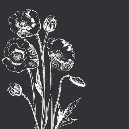 Hand drawing of a flower - poppy.  Dark background light pattern. Illustration