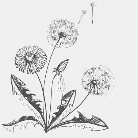 Hand drawing of a flower - dandelion. Light background dark pattern.