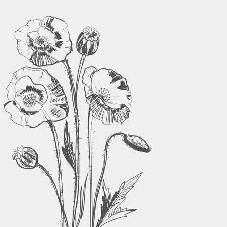herbarium: Hand drawing of a flower - poppy. Light background dark pattern. Illustration