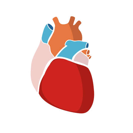 hollow body: Schematic representation of the human heart. Color image on a light background