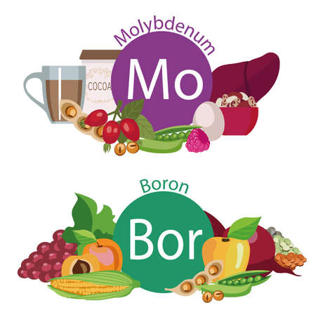 Infographics Health food.
