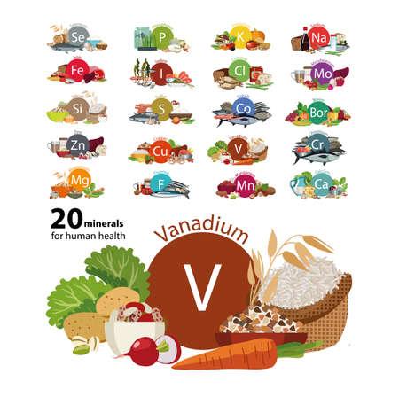 20 minerals for human health Çizim