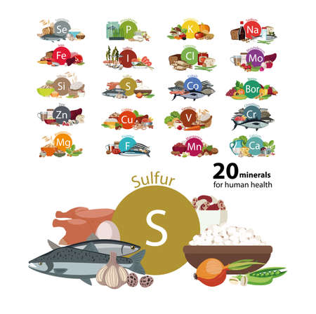 20 minerals for human health Ilustração