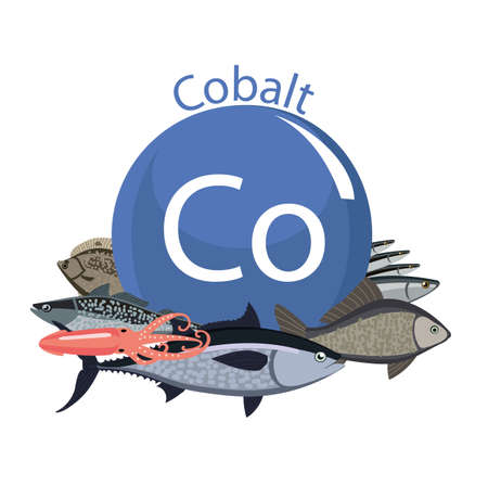 Food rich with cobalt. Healthy Food series. Natural organic products and the sign of cobalt on a white background. Seafood
