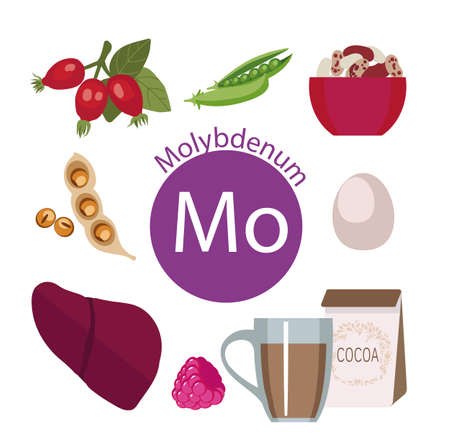 dietary: Products rich with molybdenum. Bases of healthy food. Composition from natural organic products and the sign of molybdenum on a white background. Healthy lifestyle Illustration