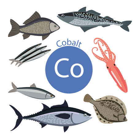 Food rich with cobalt. Healthy Food series. Natural organic products. Seafood