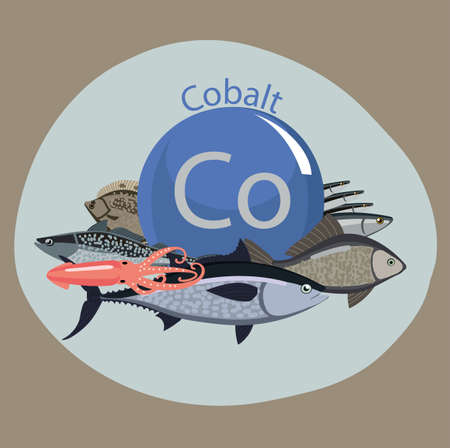 Food rich with cobalt. Healthy Food series. Natural organic products and the sign of cobalt on a color background. Seafood Illustration