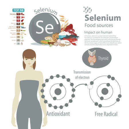 Infographics. Selenium. Food sources and influence on human health. Ilustração