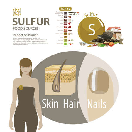 Infographics. Sulfur. Food sources and influence on human health.