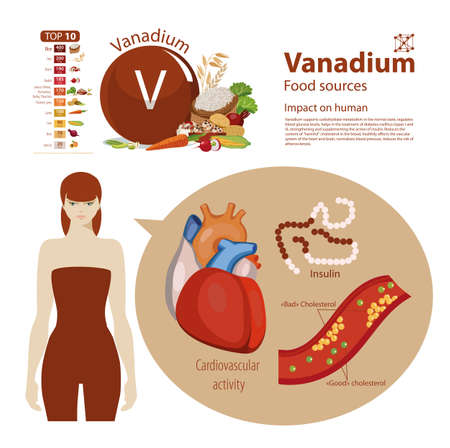 Infographics. Vanadium. Food sources and influence on human health.