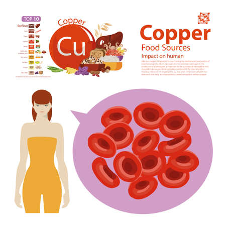 Infographics copper. Food sources. Foods with the maximum copper content. top 10 natural organic products. Fundamentals of healthy eating.