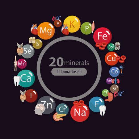 20ミネラル:微小元素とマクロ要素と人体の臓器の健康への影響。健康的な食事と健康的なライフスタイルの基礎。   イラスト・ベクター素材